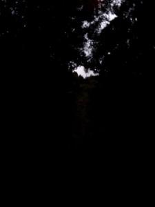 darkandscary