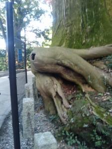 tackotree